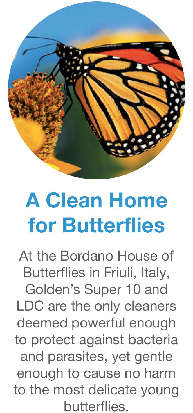 golden_saves_butterflies